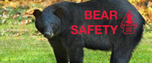 BEAR AWARENESS